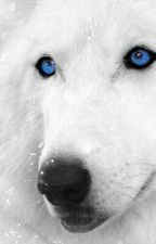 the little white wolf by xio1love