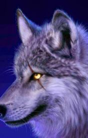 In the wolfs eye by spiritwalkerwolf