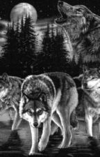 Wolf Pack Nation: Members by WolfPackNation