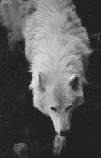 burçlar • zodiacs by lunarjoji
