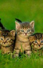 Quel(le) chat(te) es-tu ? by Patte-Rousse