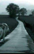 a loba e o alpha by amonutella11