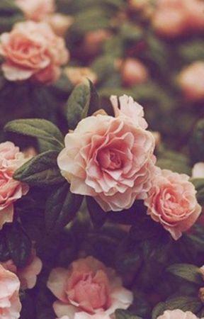 Boluda.    Blog    by M-MatsunoRin