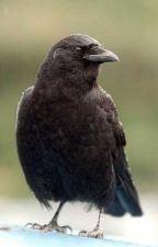 Truth of the Crows (A Harry Potter Fan-Fiction) by JeremyRandolph