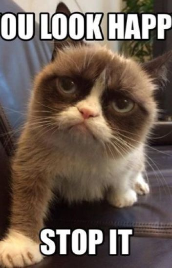 Grumpy Cat Memes Spoopyfan64 Wattpad