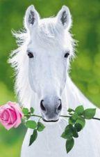 Paardenvrienden by YasmineDR2001