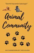 Animal Community by AnimalCommunity