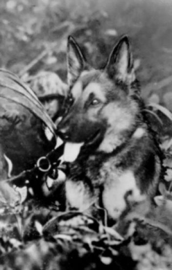 A Sergeant And His Canine (Avengers Fanfiction) - Loki - Wattpad
