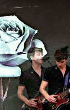 Roses🌷 / Texting Shawn Mendes  by shawnsmuffins1