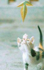 Tôi Chính Là Chú Mèo Tam Thể Của Riêng Em • p.jm by LoveBTSMinSuga