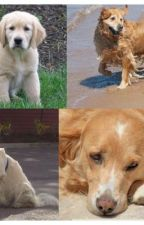 Sad Dog Story by AmberSchneck