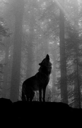 The Black Wolf  by AnisaLove14