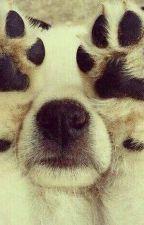 animaux trop cute  by LegolasNewt
