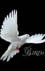 Birds by JadaMiller