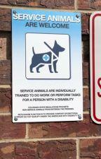 Service dogs by Kitten_33333
