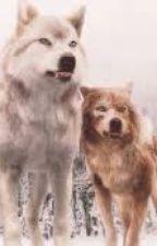 Les secrets des Quileute by Little-wolfL