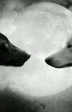 Lobos enamorados by AraceliWolf15