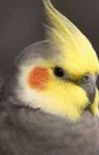 Ten Things You Have To Know About Cockatiels by ProjectReporter