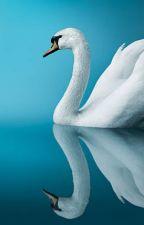 Famille Swan : un secret peut  en cacher un autre by Girl_Pur17