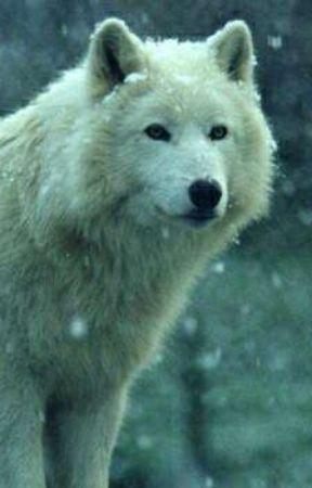 ||Werwolf Roleplay|| by Blqckerrorrr