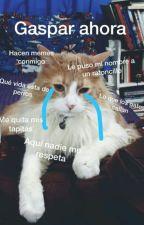 Lo que callan las mascotas by marcedia