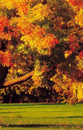 Under The Autumn Tree by Krissylovehart