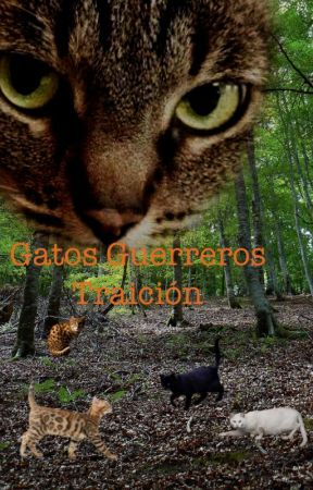 gatos guerreros traicion by sienixa