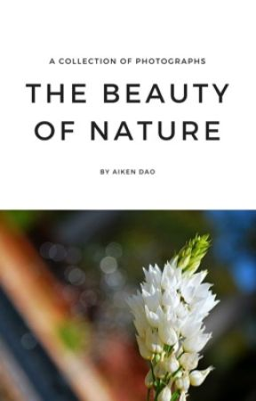 THE BEAUTY OF NATURE by aikendao