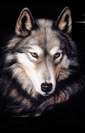 Enamorada De Un Lobo Cap 2 Mejores Amigos Wattpad