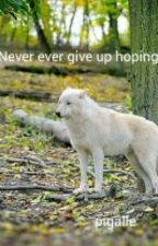 Never ever give up hoping by pigalle