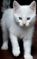 the little kitten shifter by PercysLittleSister0