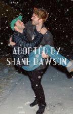 Adopted by Shane Dawson  by Raebecca127
