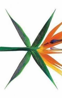 Korea's Idol