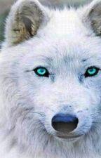 White Wolf by bella15794