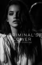 a criminal's flower | on hold by bittersweet-roses