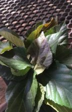 Leaf me behind by lexisorrells