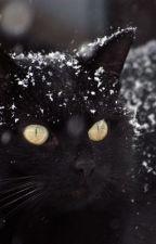 Den svarta katten by superagnes07