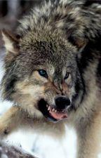 Wolf Instinct by namelessmelow