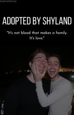 Adopted by Shyland | ONE-SHOTS by winterdrarry