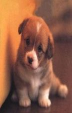 PUPPIES FOR SALE (short story) / (inspirational ) by intimidating_eyes