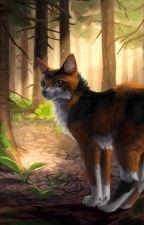 История умной кошки|Kety Jeis. by the_dark_constellati