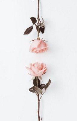 Đọc truyện Tựa cánh hoa rơi → Sexy2Lee