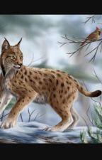 Ask or Mukilo the Lynx! by _underfell_Venom_