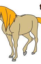 horseland Ιστορίες - Wattpad