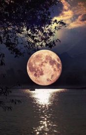 The Alpha's Bloodline by LittleTrini1DGirl