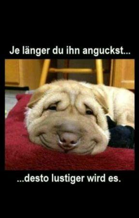 Lustige Bilder und Sprüche  by Im_Takt_der_Worte