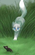 Warrior Cat OCs! by Lol__IDK