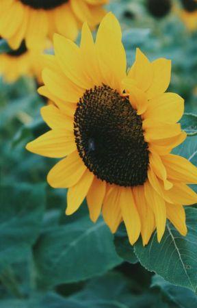 Definisi Hati Lebah Madu Sketsa Cinta Adriani Wattpad