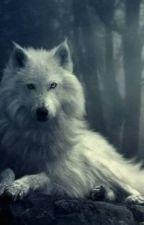 Best Werewolf Stories by caitlin5976