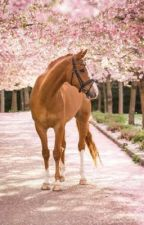 Horse Mating Stories by horsesanddogsmating